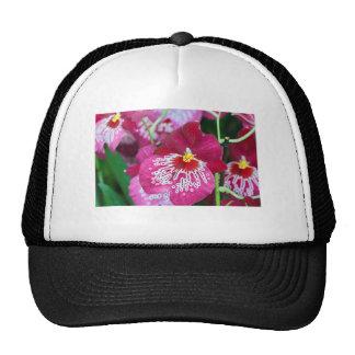 Flor de la orquídea del Miltonia Gorro De Camionero
