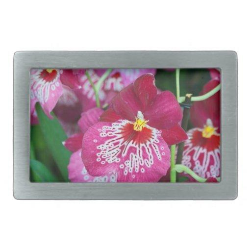Flor de la orquídea del Miltonia Hebilla De Cinturón Rectangular
