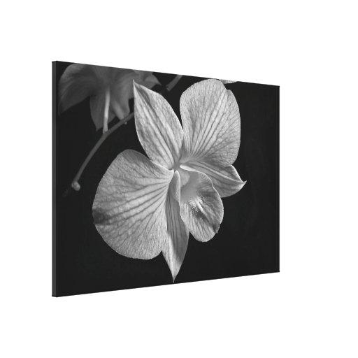 Flor de la orquídea en la impresión negra y blanca