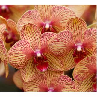 Flor de la orquídea esculturas fotograficas