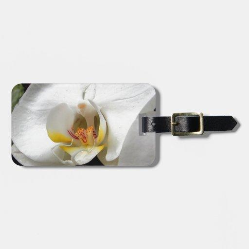 Flor de la orquídea etiqueta para maleta
