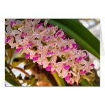 Flor de la orquídea felicitación