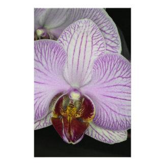 """Flor de la orquídea folleto 5.5"""" x 8.5"""""""