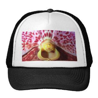 Flor de la orquídea gorra