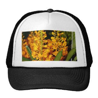 Flor de la orquídea gorro