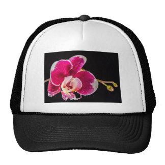 Flor de la orquídea gorras