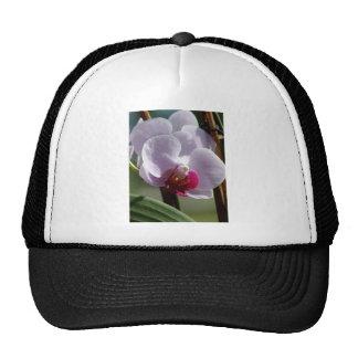 Flor de la orquídea gorros