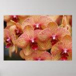 Flor de la orquídea impresiones