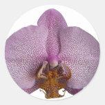 Flor de la orquídea pegatina redonda