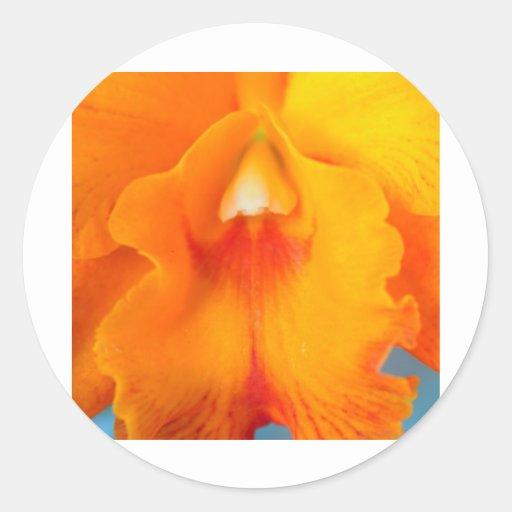 Flor de la orquídea pegatinas redondas