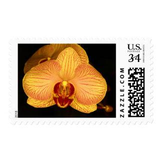 Flor de la orquídea envio