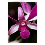 Flor de la orquídea tarjeta