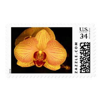 Flor de la orquídea timbres postales