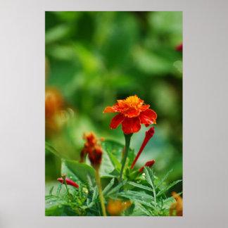 Flor de la página delantera póster