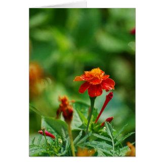 Flor de la página delantera tarjeta de felicitación