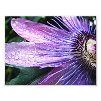Flor de la pasión cojinete