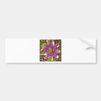 flor de la pasión de la lila pegatina para auto