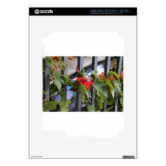 Flor de la pasión del escarlata iPad 3 skin