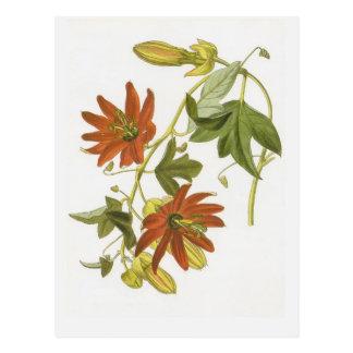 Flor de la pasión tarjeta postal