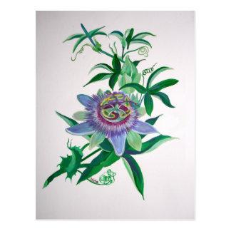 Flor de la pasión postal