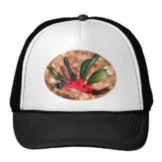 Flor de la pata de canguro en la floración (oval) gorra