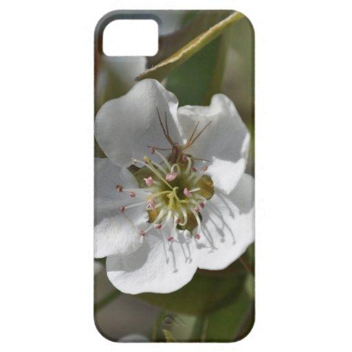 Flor de la pera de la araña funda para iPhone 5 barely there
