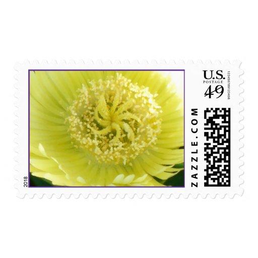 Flor de la planta de hielo franqueo