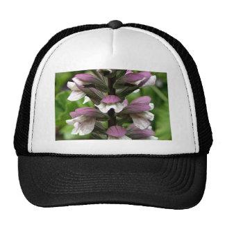 Flor de la planta de ostra en la floración gorros bordados