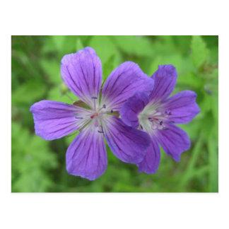 Flor de la postal