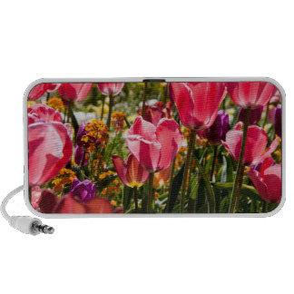 Flor de la primavera laptop altavoz