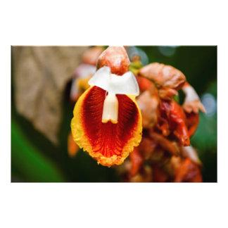 Flor de la primavera cojinete