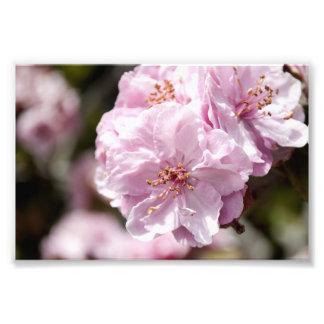 Flor de la primavera fotografía