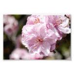 Flor de la primavera impresiones fotograficas