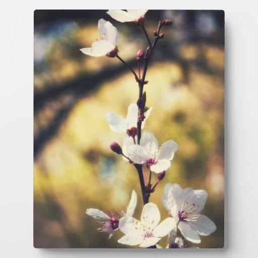 Flor de la primavera placas con fotos