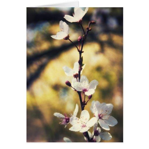 Flor de la primavera tarjeta de felicitación