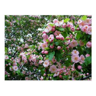 Flor de la primavera tarjeta postal