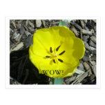 Flor de la primavera tarjetas postales