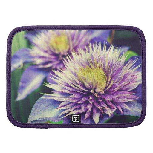 Flor de la púrpura del Clematis Organizador
