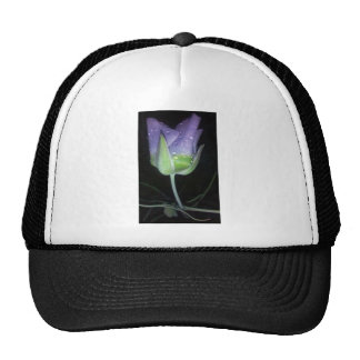 flor de la púrpura del rocío gorro