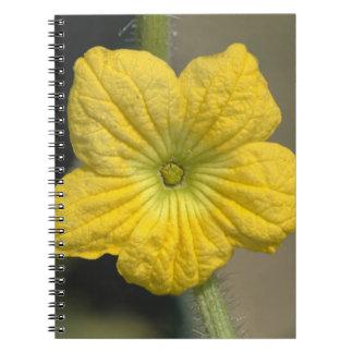 Flor de la sandía libros de apuntes