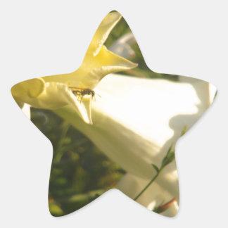 Flor de la vid de trompeta con una avispa pegatina en forma de estrella