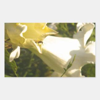 Flor de la vid de trompeta con una avispa pegatina rectangular