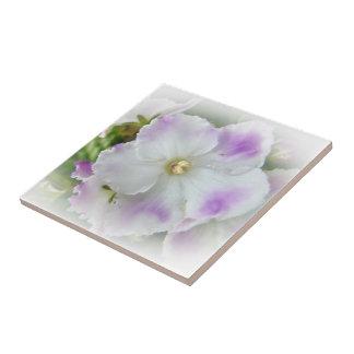 Flor de la violeta africana azulejos