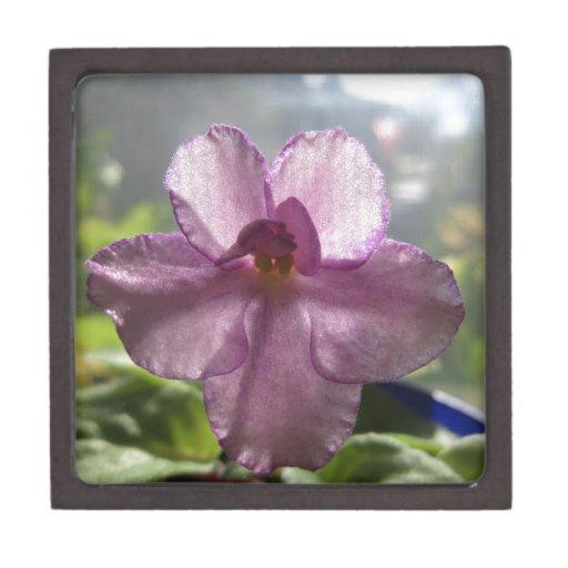 Flor de la violeta africana de la lavanda cajas de regalo de calidad