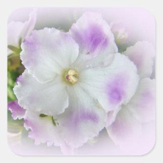 Flor de la violeta africana pegatina cuadrada