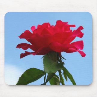 Flor de las rosas fuertes tapetes de ratones