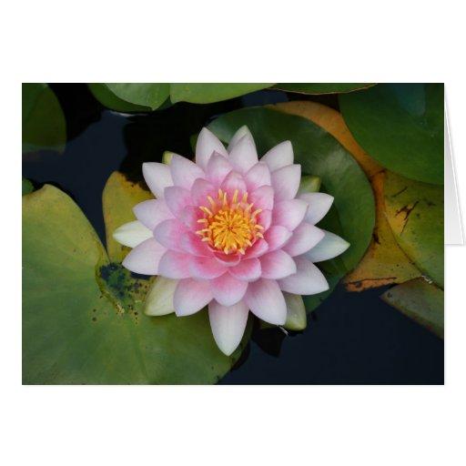 Flor de Lilypad Tarjeta De Felicitación