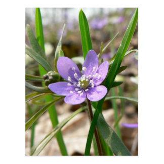 Flor de Liverleaf Postales