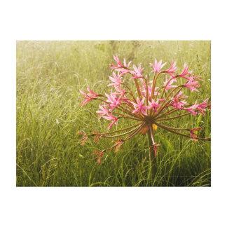 Flor de los candelabros (Brunsvigia Radulosa) Impresion En Lona