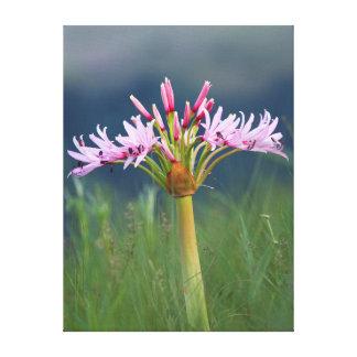Flor de los candelabros (Brunsvigia Radulosa), Lona Estirada Galerias